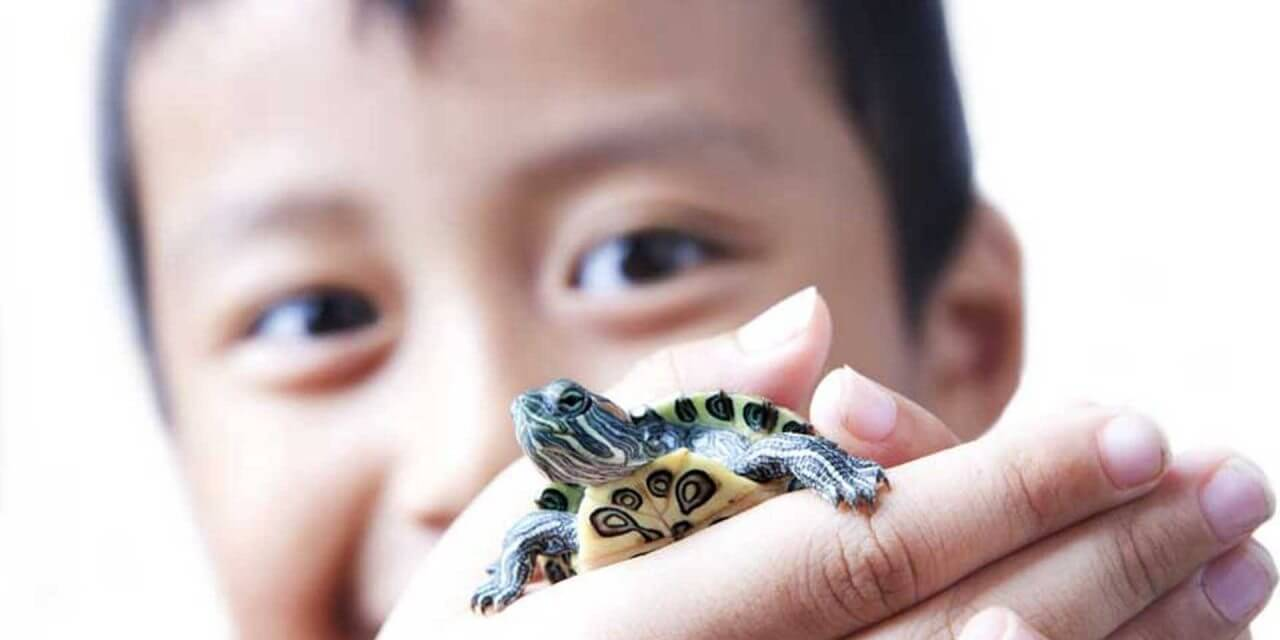 kid-with-turtle-1280x640.jpg