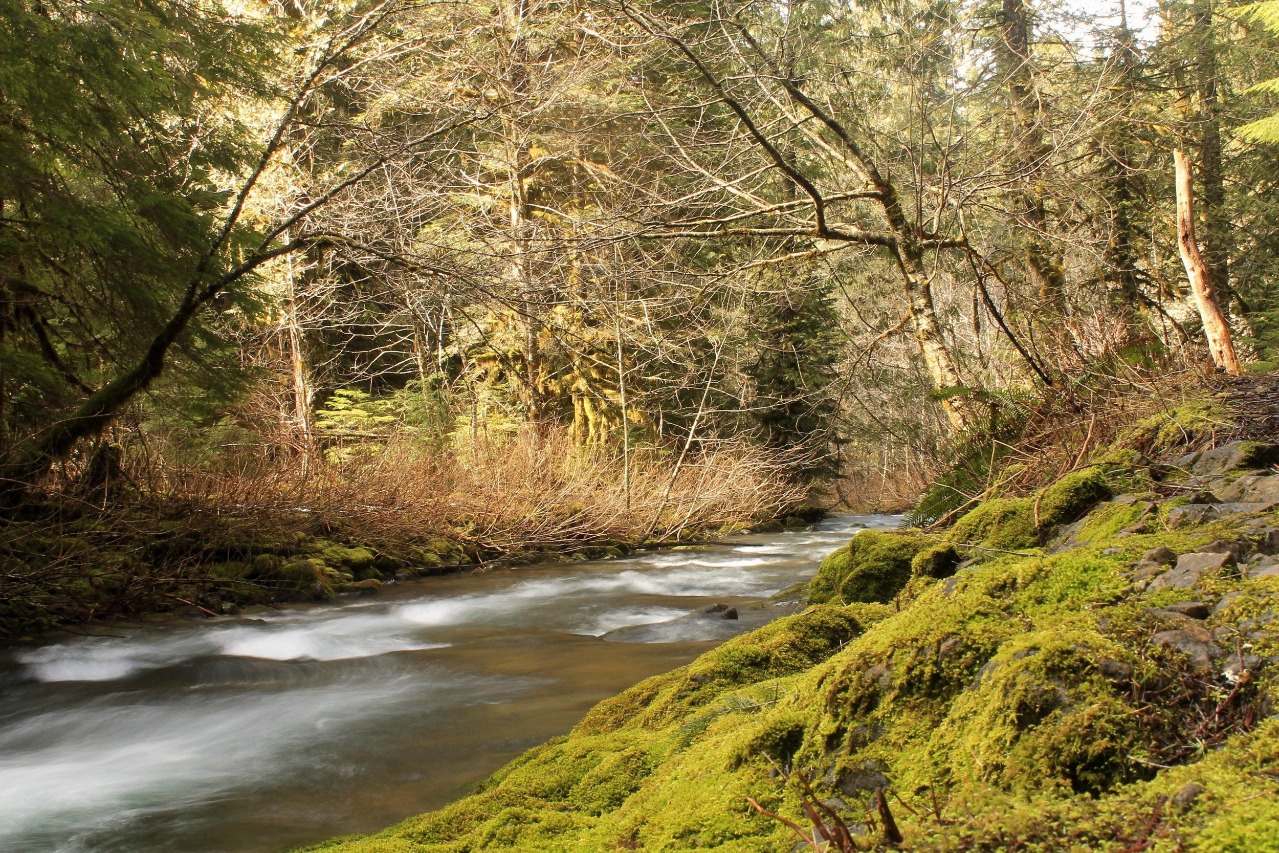 Hike 37: The Other Eagle Creek
