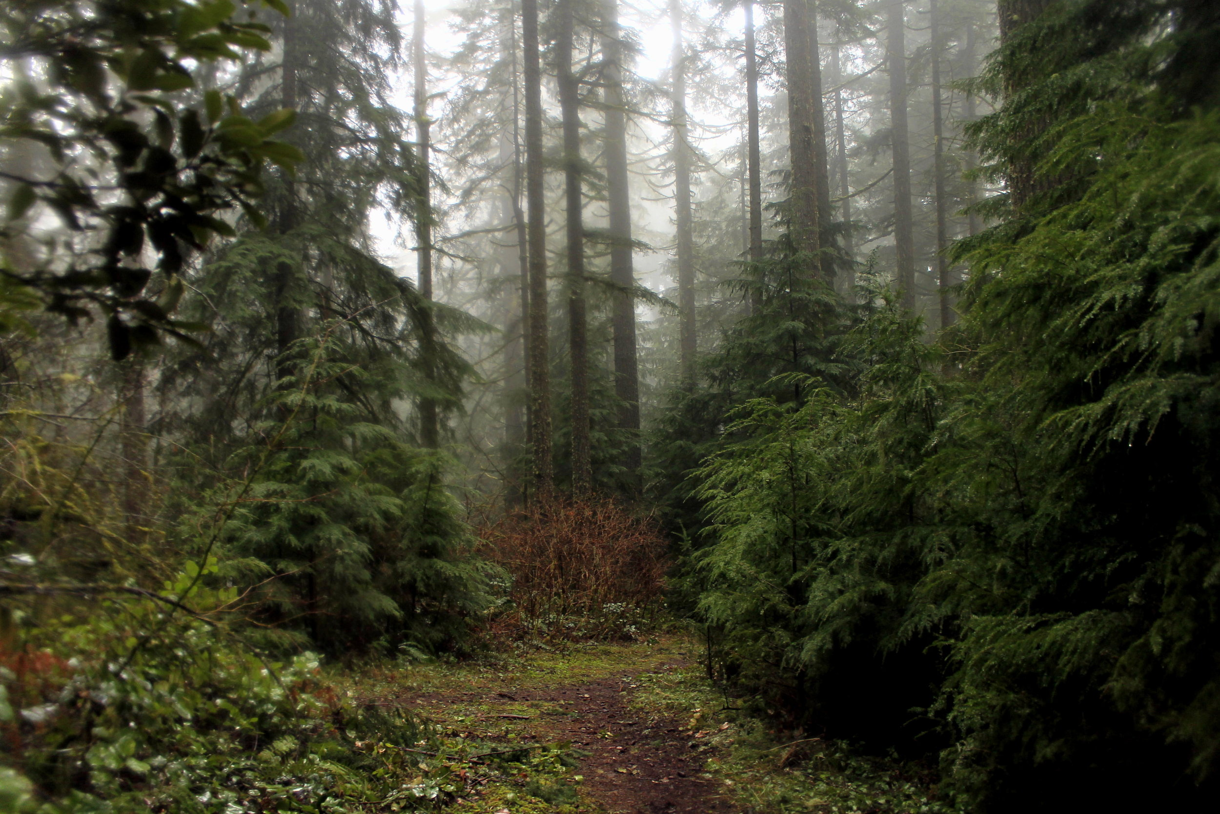 Deep in the Silver Falls backcountry on a rainy day.
