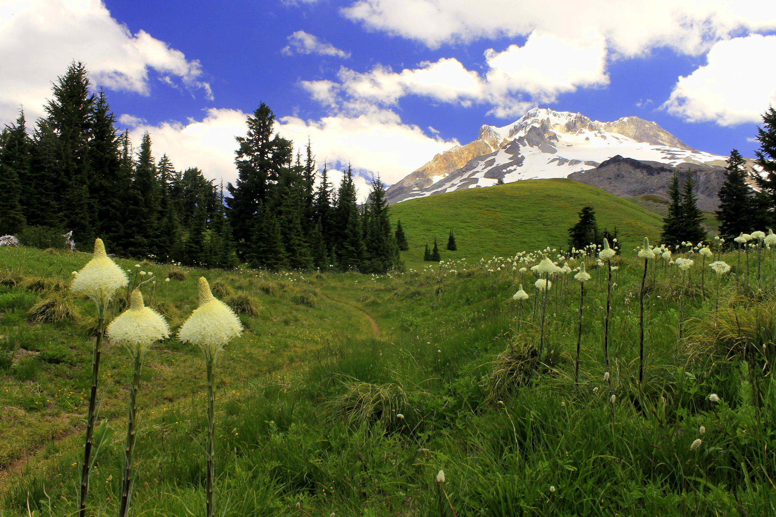 Beargrass and Mount Hood at Paradise Park.