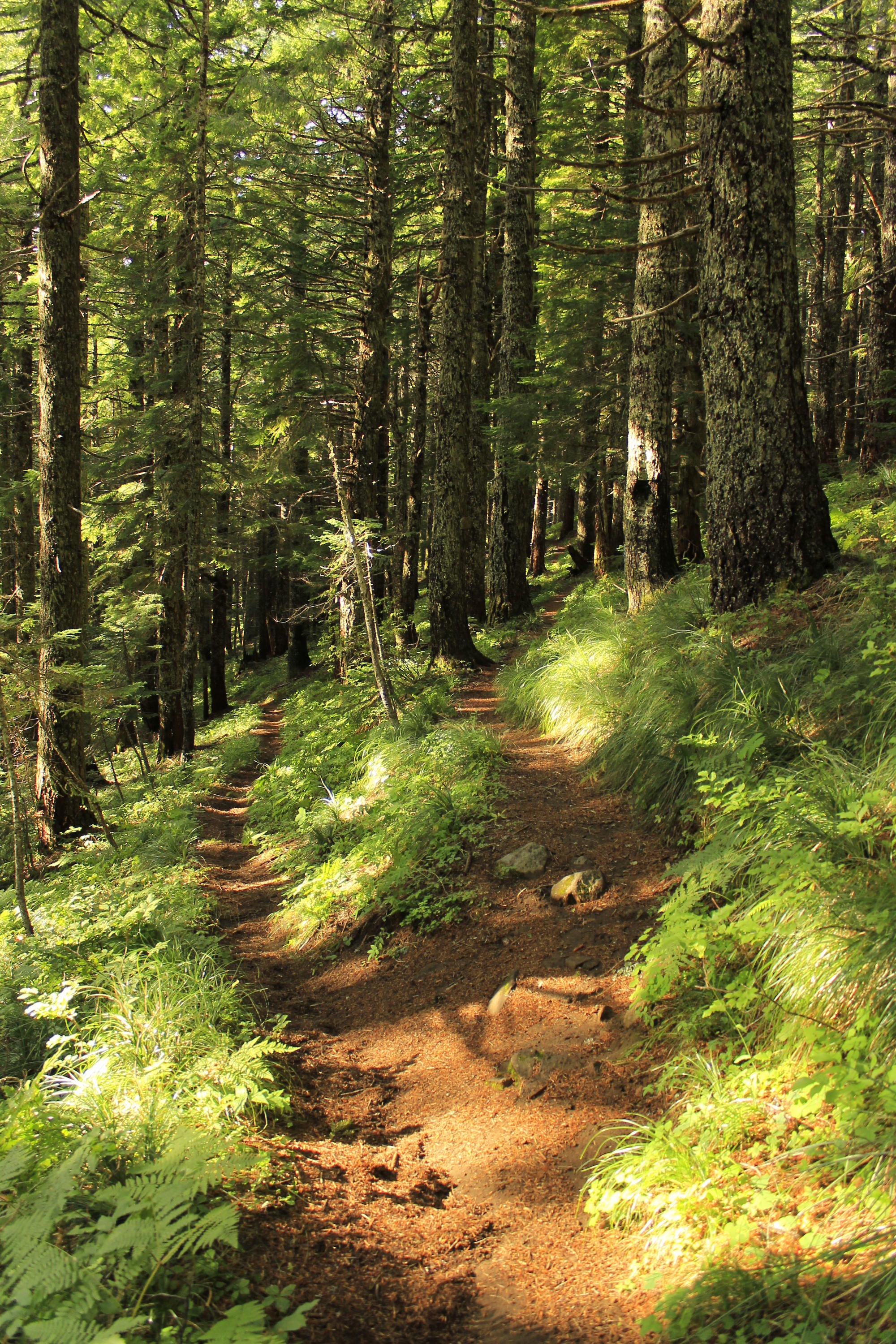 Two trails diverge on the slopes of Tumala Mountain.
