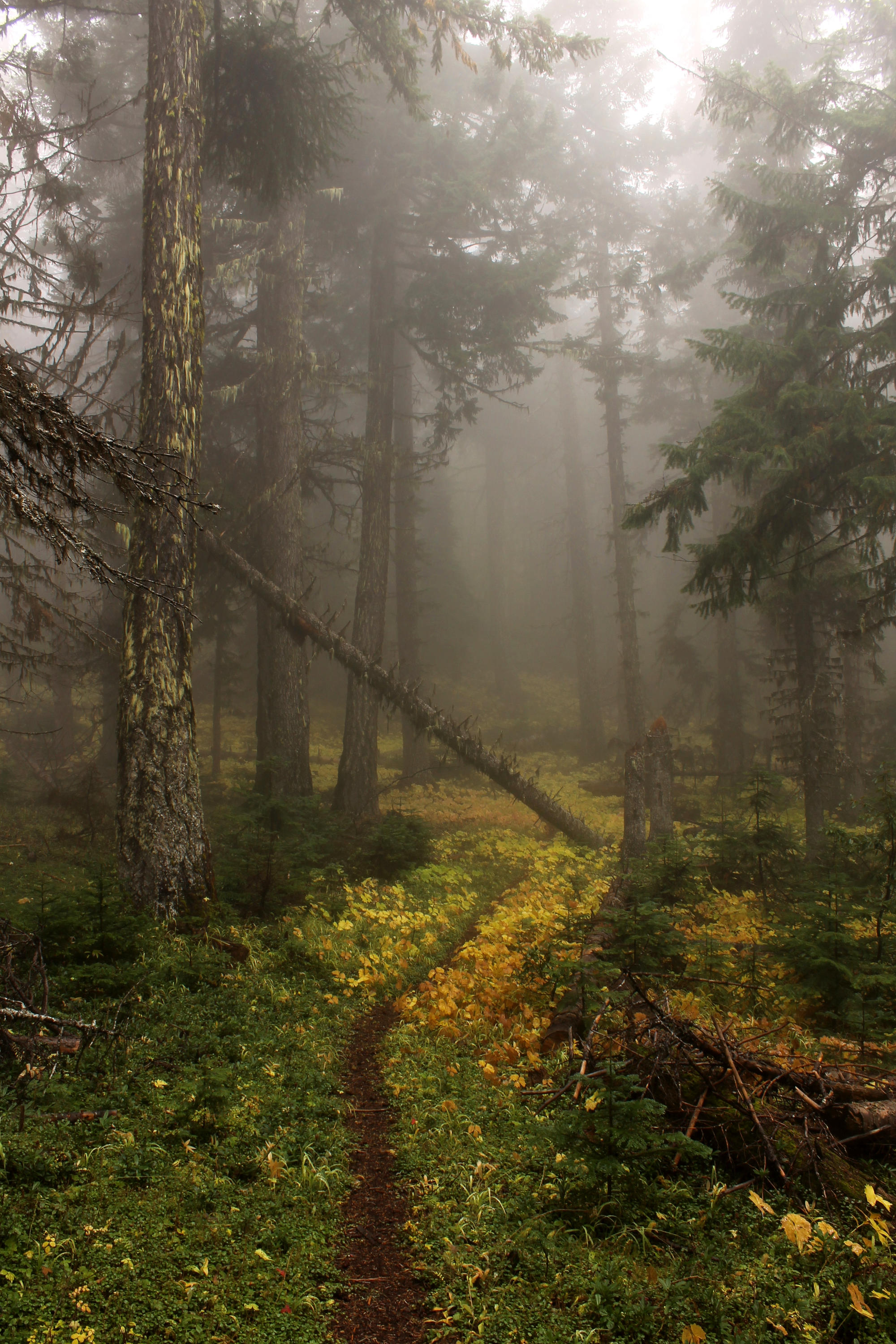 The beautiful and little-known Lamberson Spur Trail on the east slopes of Mount Hood.