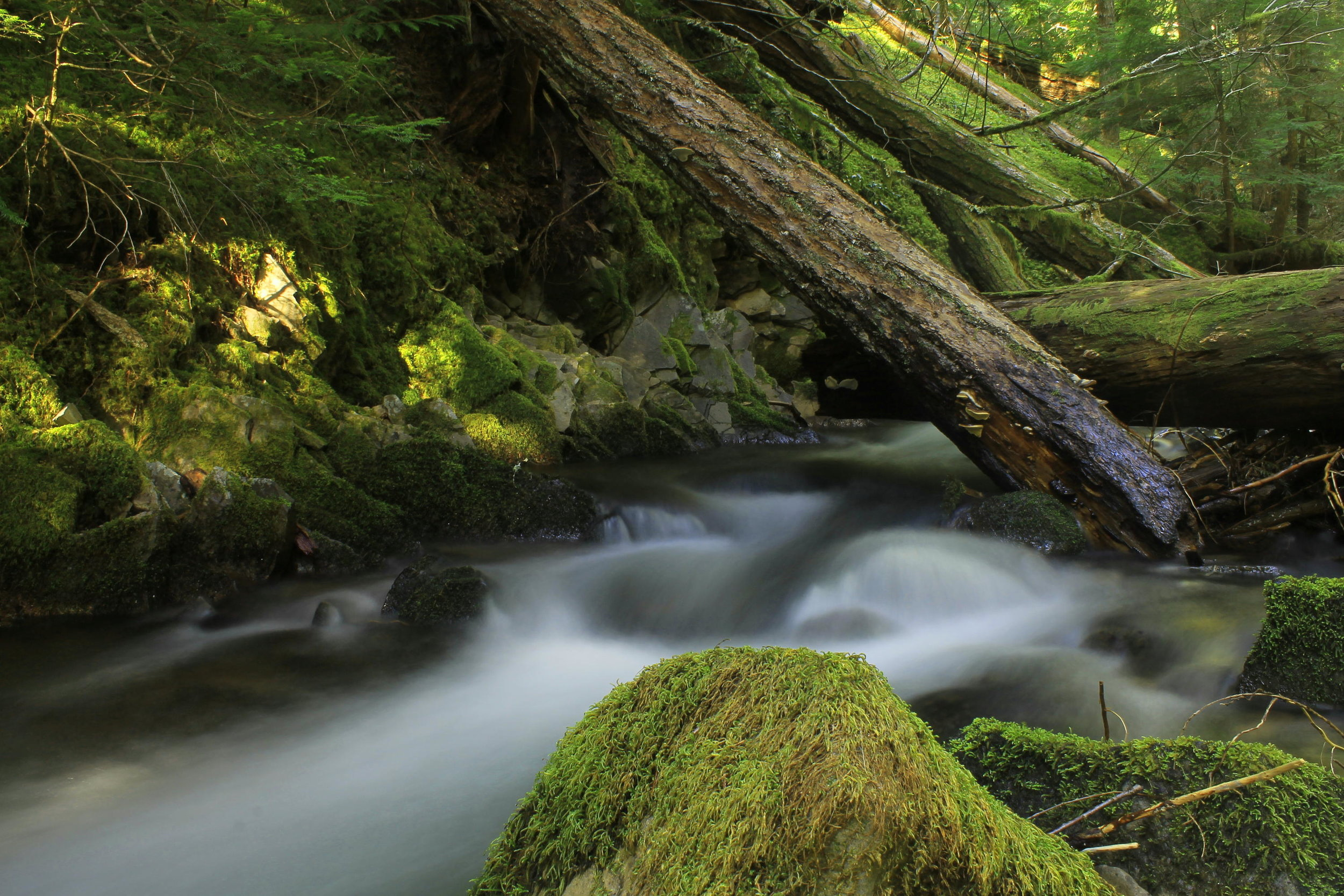 Beautiful Rho Creek, deep in the upper reaches of the Clackamas River canyon.
