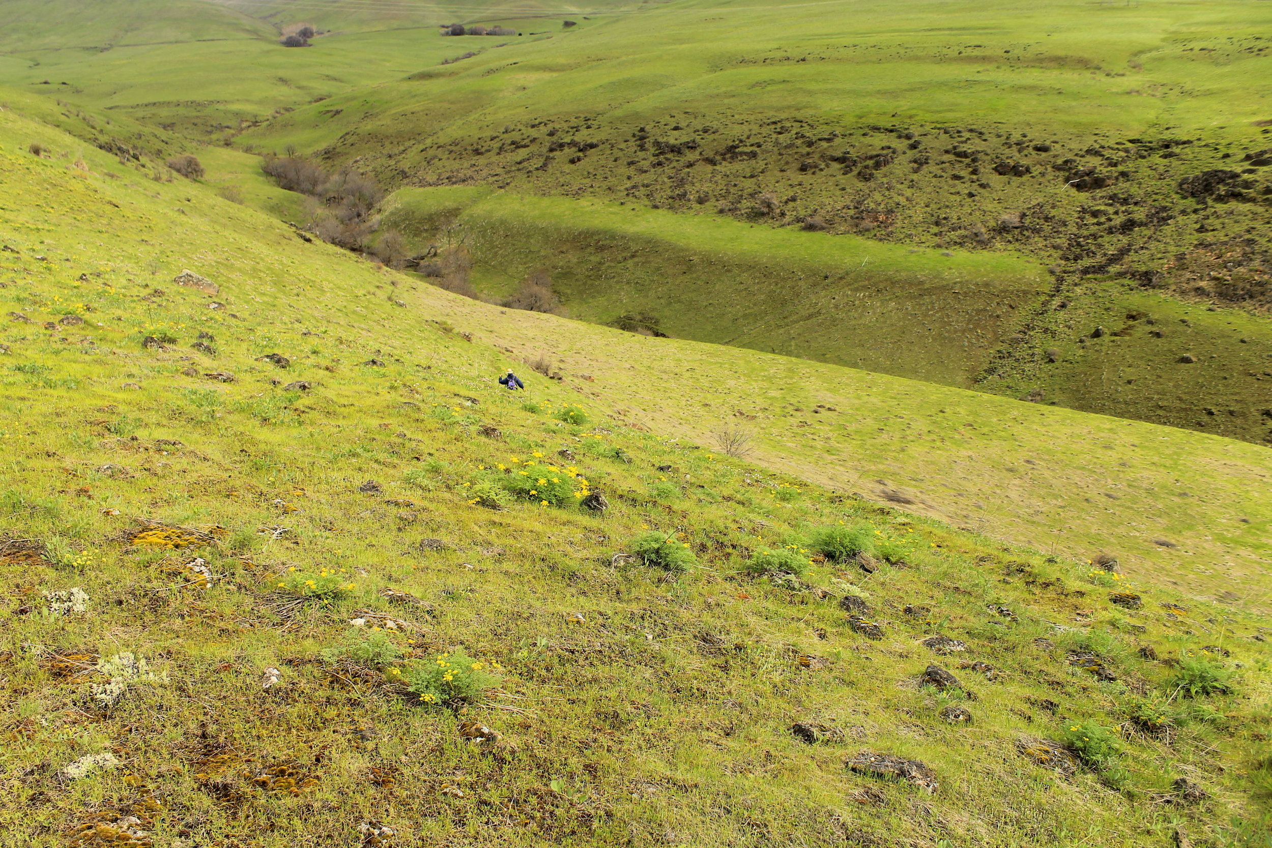 Off-trail in Columbia Hills State Park