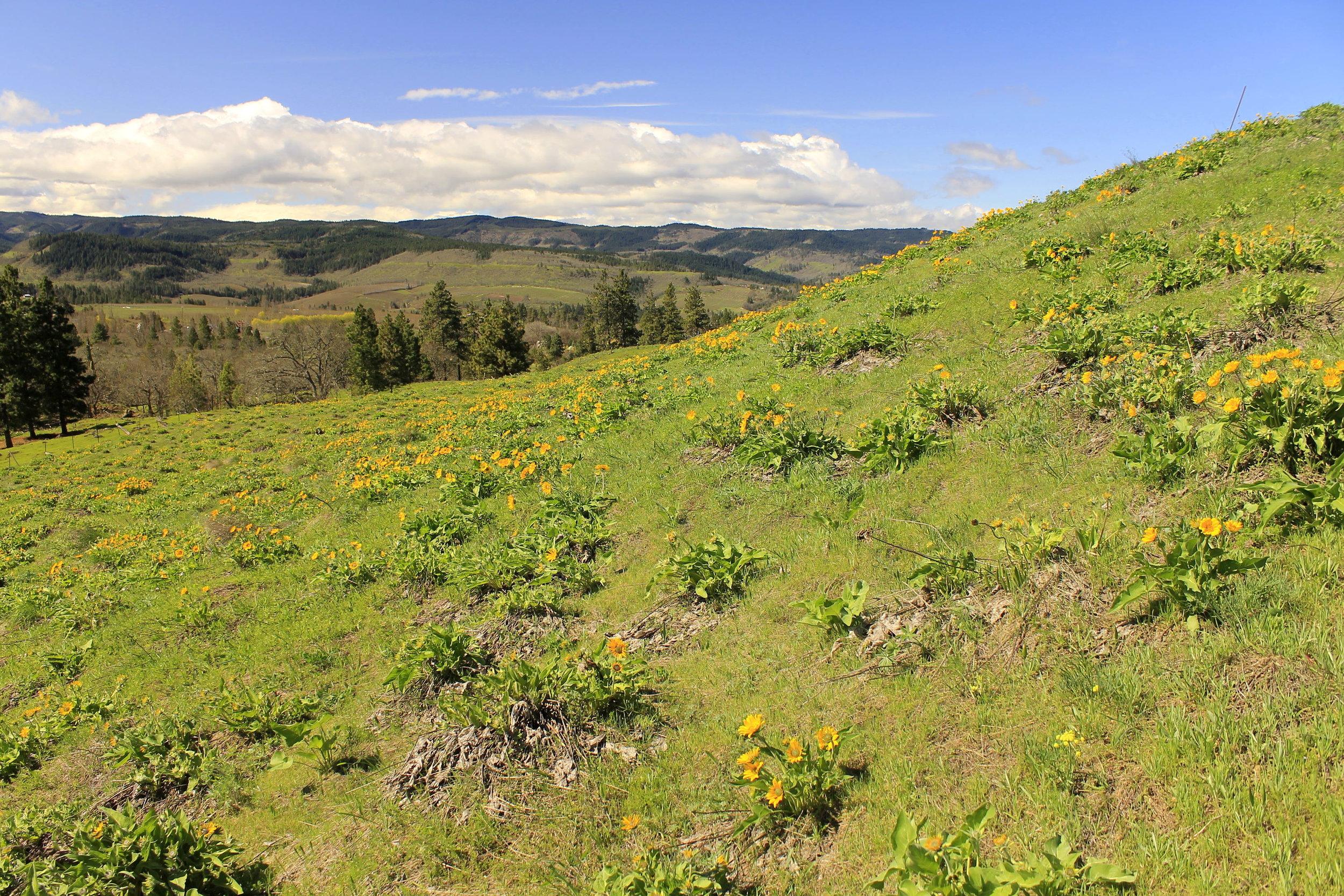 Memaloose Hills