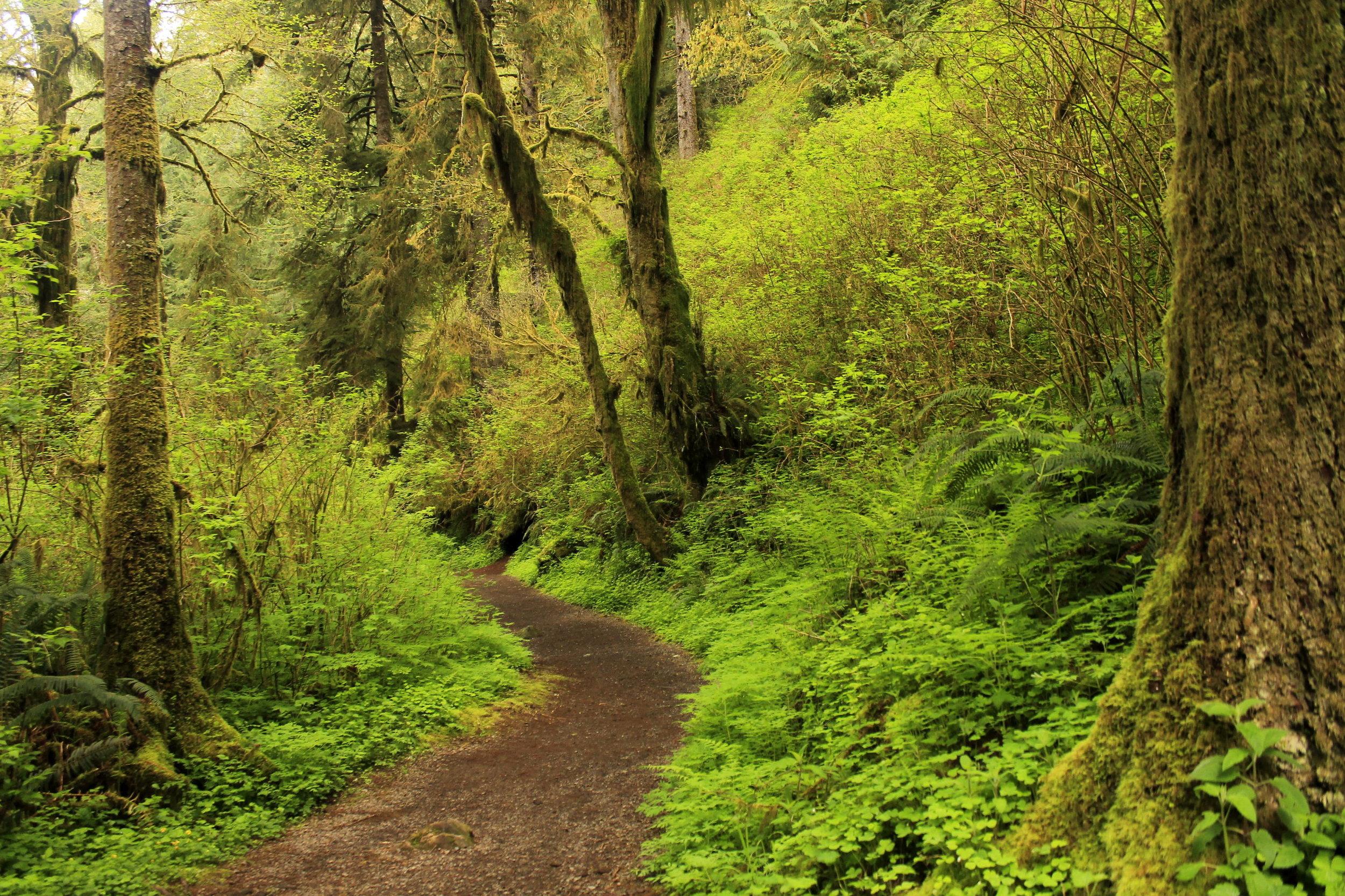 Lush forest near Munson Creek Falls