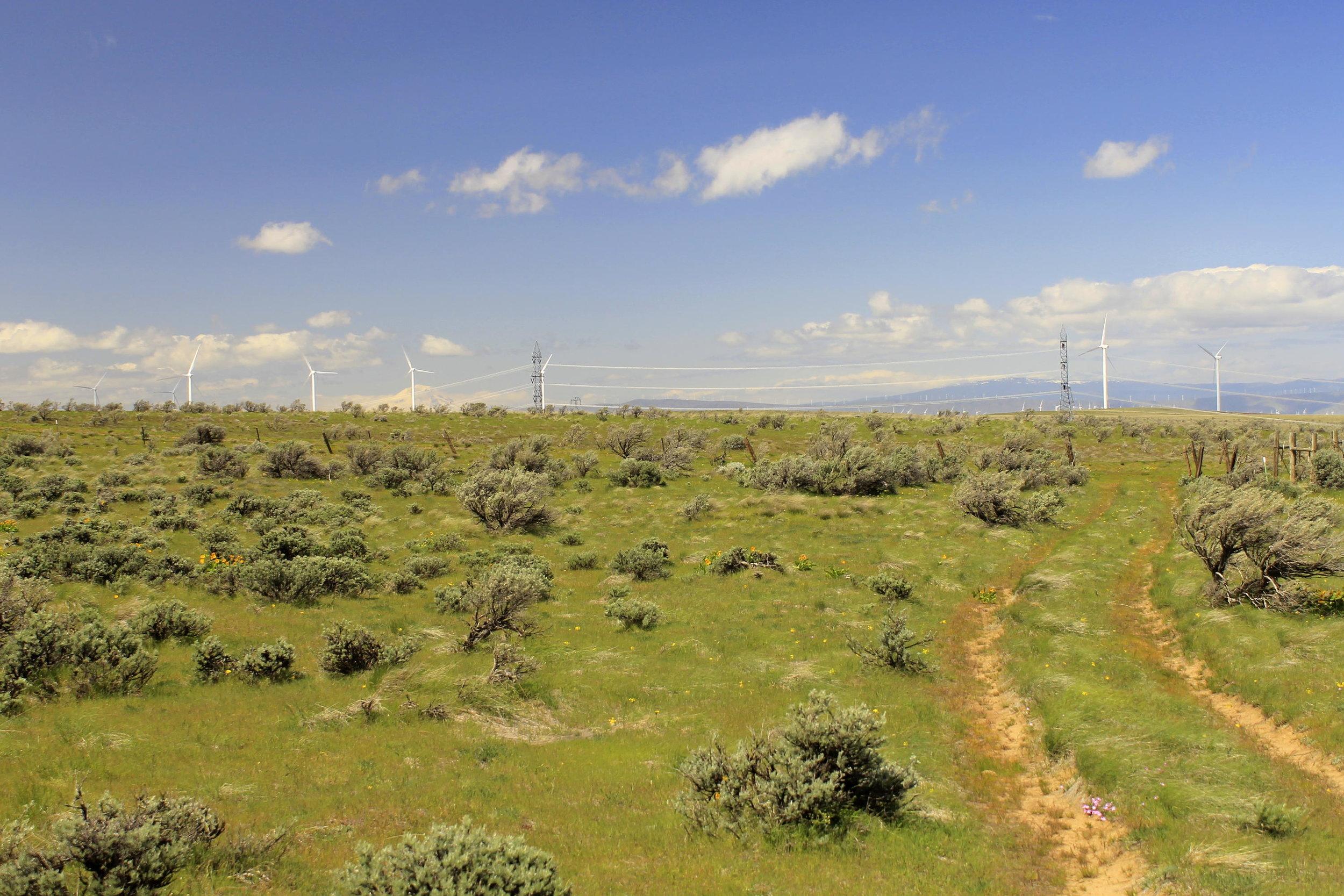 Mount Adams and wind turbines