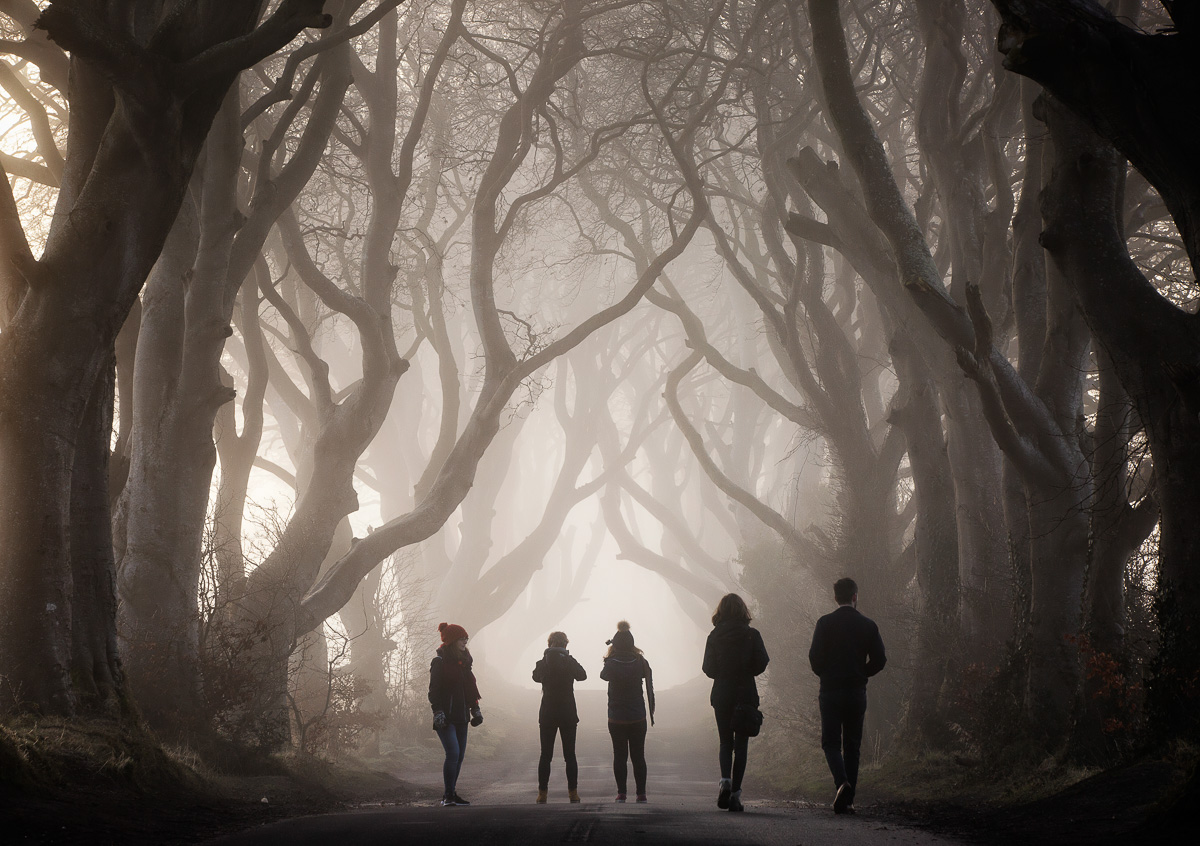 DARK HEDGES NIGHT TOUR - As the night falls…….Join us as night falls and step inside the Dark Hedges for a truly unique and haunting experience. Our StoryGuides will walk you through the Dark Hedges Estate, the Game of Thrones film location, and share with you the history of how it all began. Keep your eyes peeled, as the Grey Lady Ghost likes to appear at night.