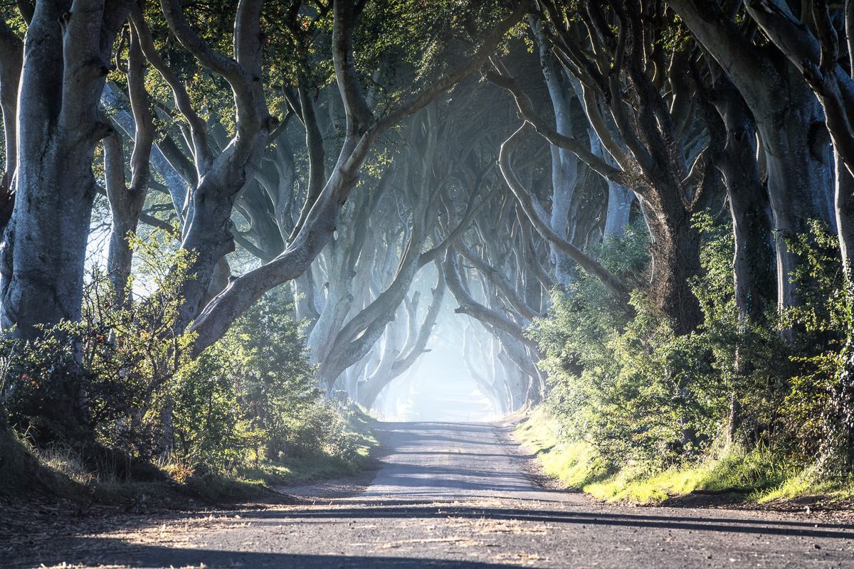 32300_Game_of_Thrones__-_The_Dark_Hedges_The_Kingsroad.jpg