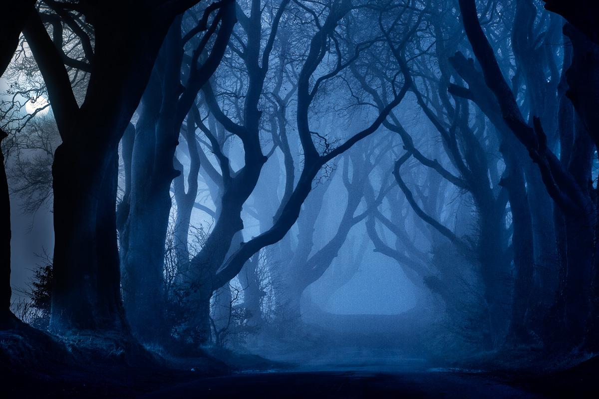 32447_Dark_Hedges__County_Antrim.jpg