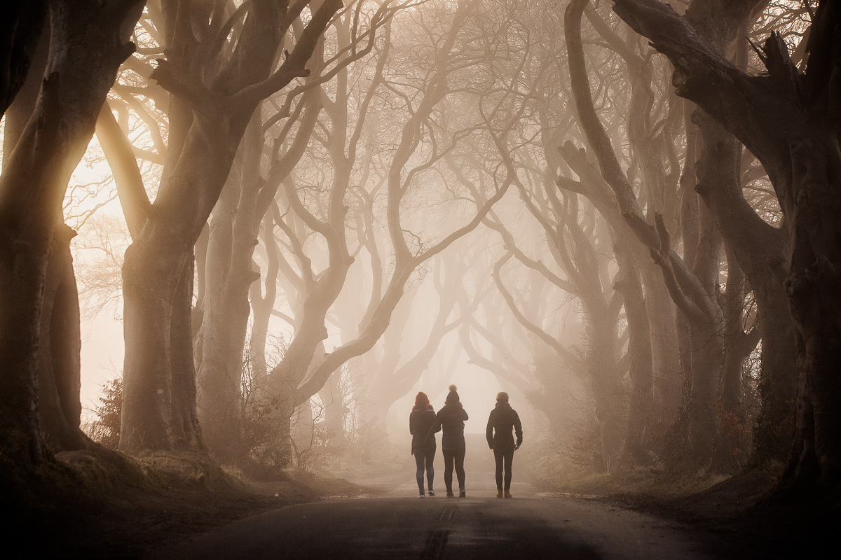32449_Dark_Hedges__County_Antrim.jpg