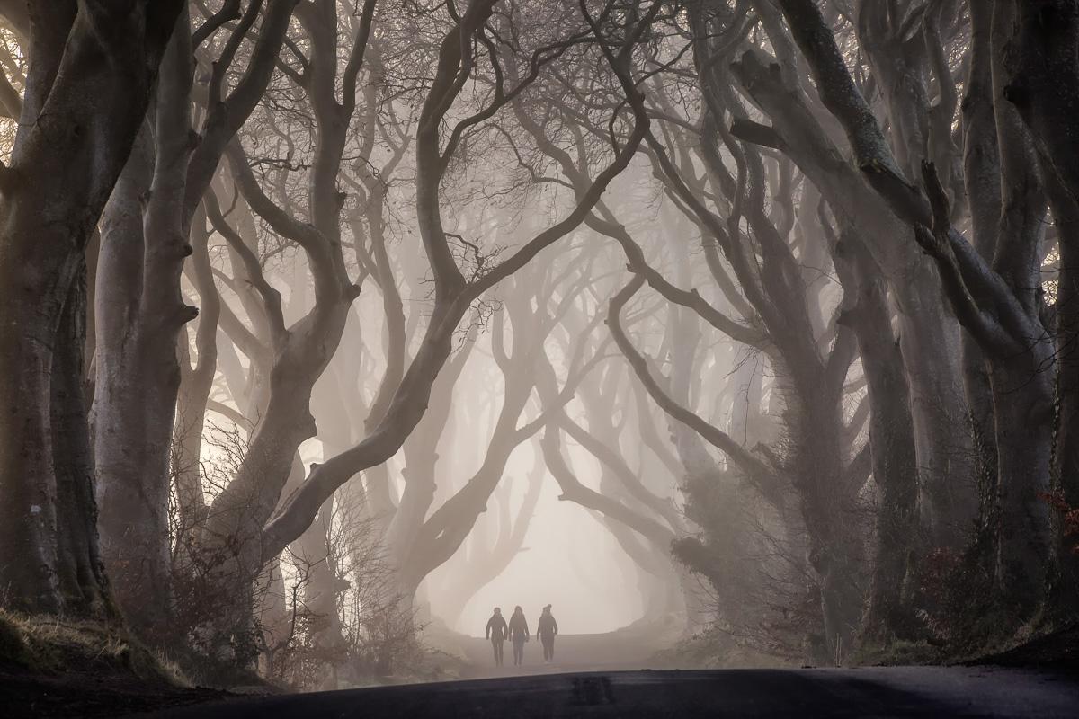 32453_Dark_Hedges__County_Antrim.jpg