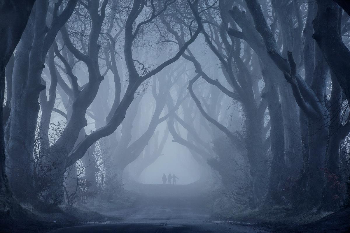 32450_Dark_Hedges__County_Antrim.jpg