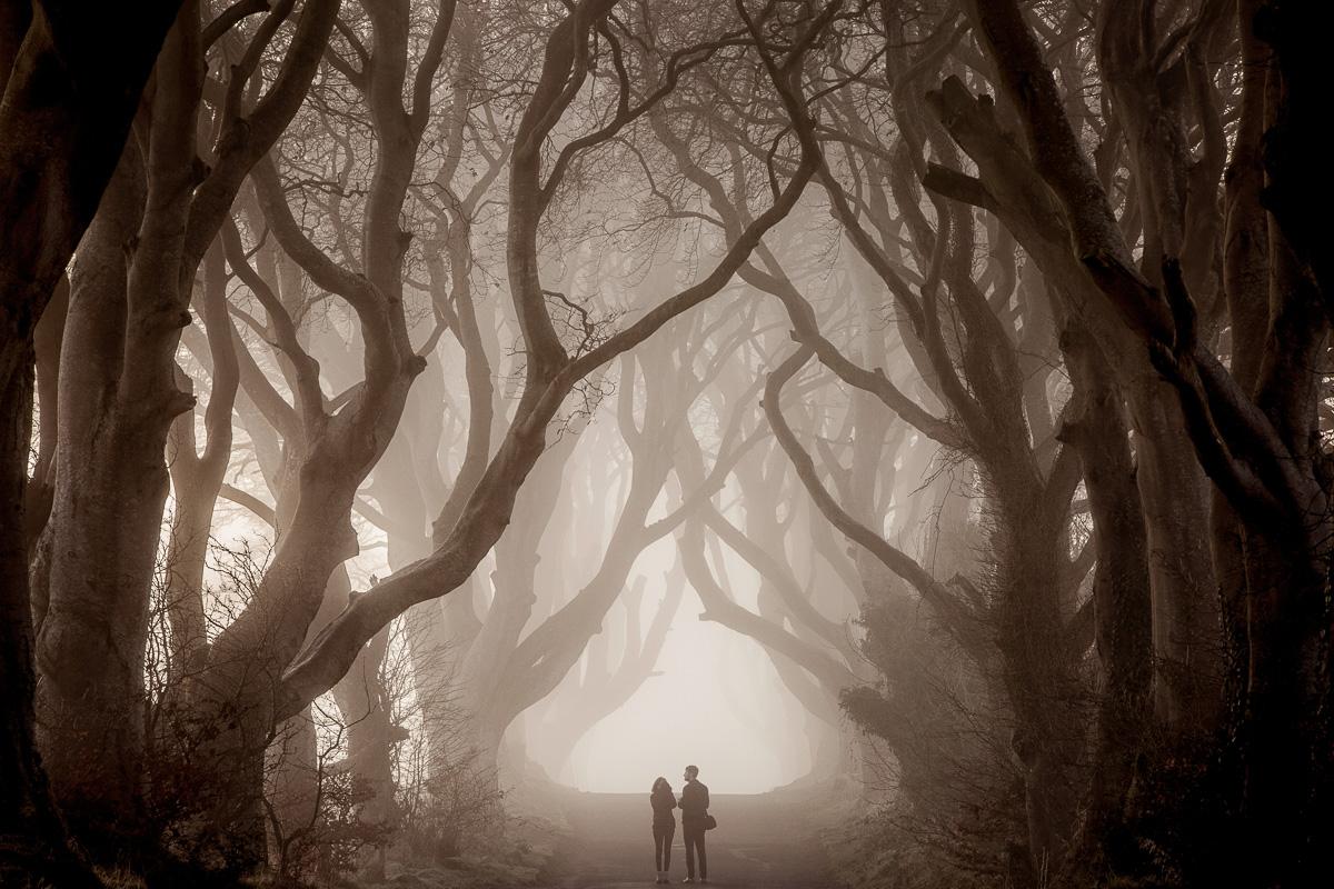 32457_Dark_Hedges__County_Antrim.jpg