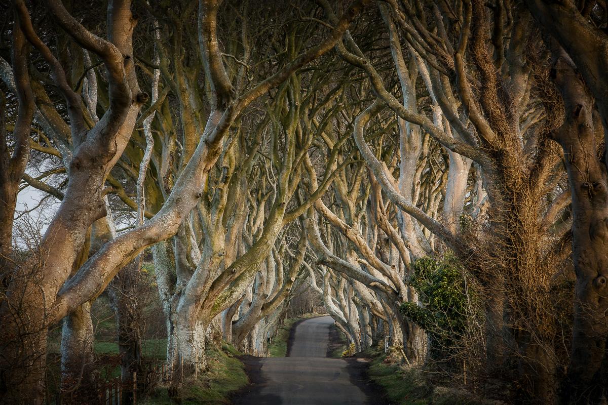 25947_Game_of_Thrones__-_The_Dark_Hedges_The_Kingsroad.jpg