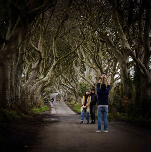 DarkHedges1.JPG