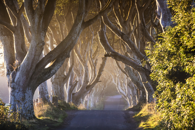 32293_Game of Thrones_ - The Dark Hedges_The Kingsroad.jpg
