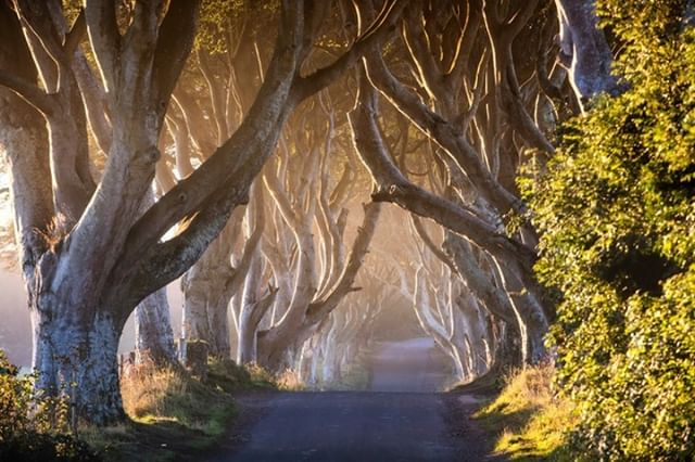 The Dark Hedges is an incredible place to photograph! What's your #darkhedges photo moment, share your favorite image to Dark Hedges Experience #discoverni #northernireland #photography #summerholidays  If you haven't been yet our expert guides can show you the best spots to capture that magical image along the Dark Hedges and around the Dark Hedges Estate. Tours available daily on the hour from the Experience Centre.