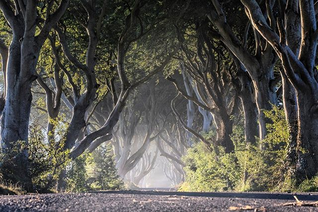 Experience the magic of the Dark Hedges, made famous in Season 2 of the Game of Thrones. Book your guided tour now at the Dark Hedges Experience Centre and begin a Game of Thrones adventure in Northern Ireland Discover Northern Ireland