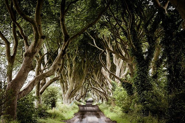 #weekend Plan your road trip along the Causeway Coastal Route. Make a stop and take a 45 minute guided tour of the Dark Hedges and Dark Hedges Estate darkhedgesexperience