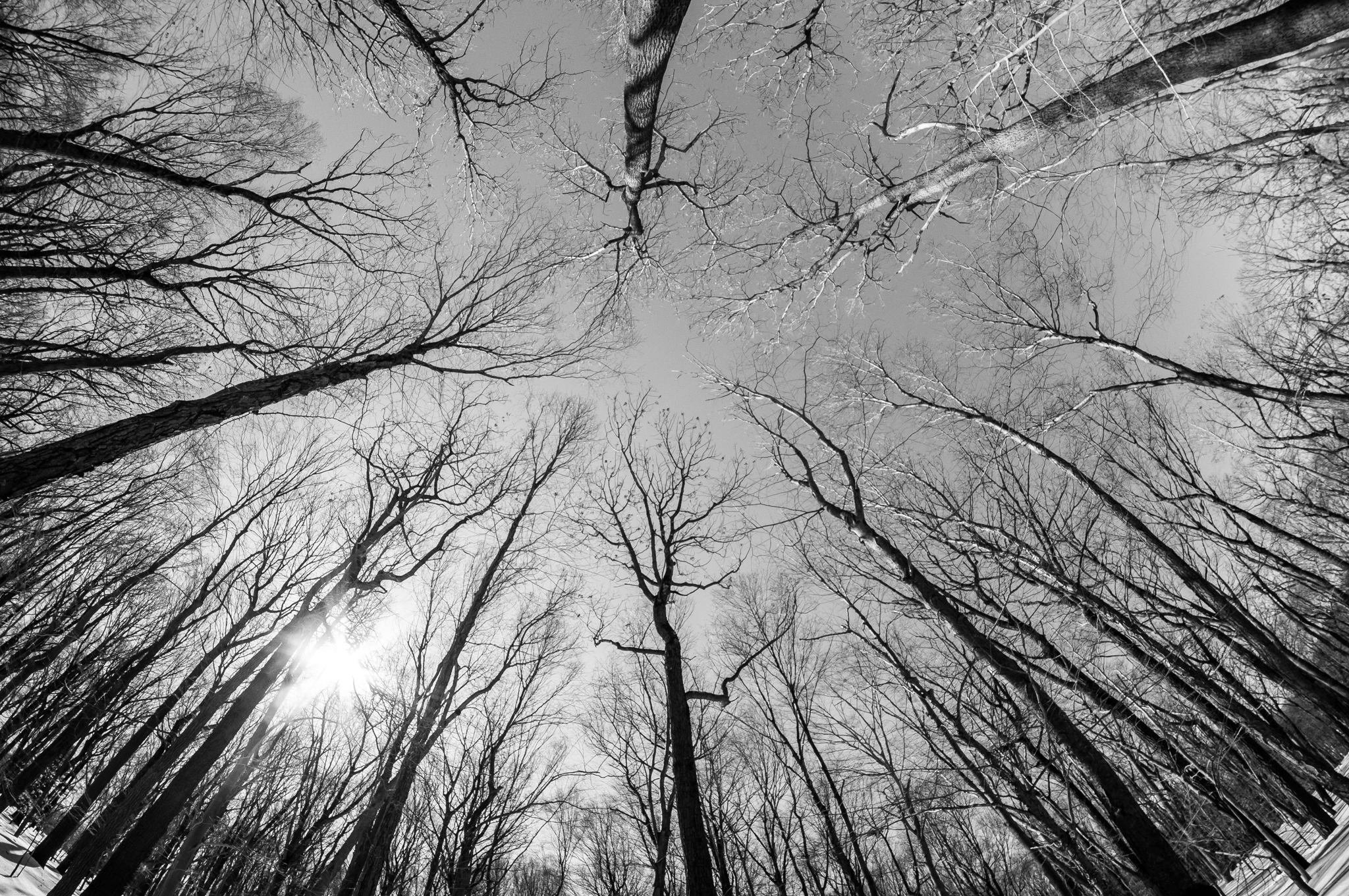 I used to process in black and white much more often — maybe I'll rediscover a passion for it. This is another from my early days as a photographer, back in 2014. It's from Jockey Hollow, at Morristown National Historical Park, during a winter hike.