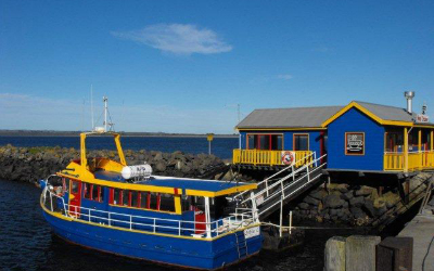 Stanley Hotel and Apartments- Things to do in Stanley Tasmania  Stanley seal cruises