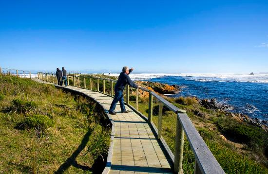 Stanley Hotel and Apartments- Things to do near Stanley Tasmania  Arthur River