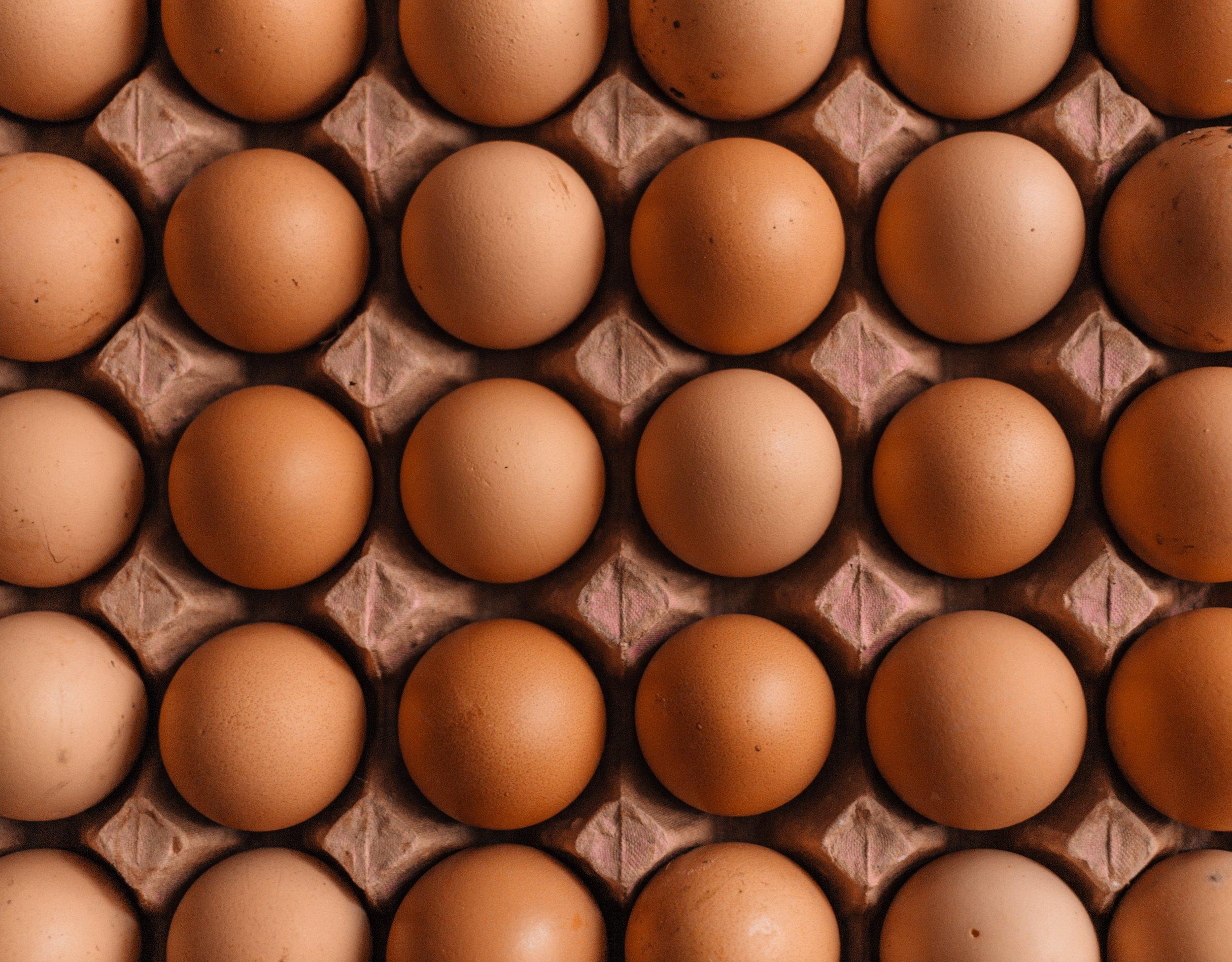 carton eggs.jpg