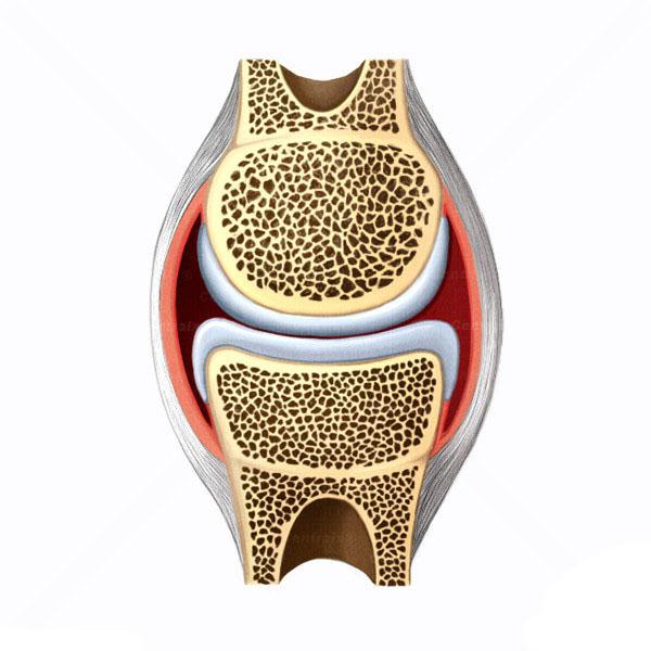 capsula.articular.articulacoes.jpg