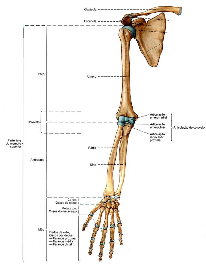 articulação-braço-mao-articulacoes.pt.jpg
