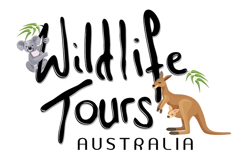 WILDLIFE-TOURS-LOGO_Square-01.png