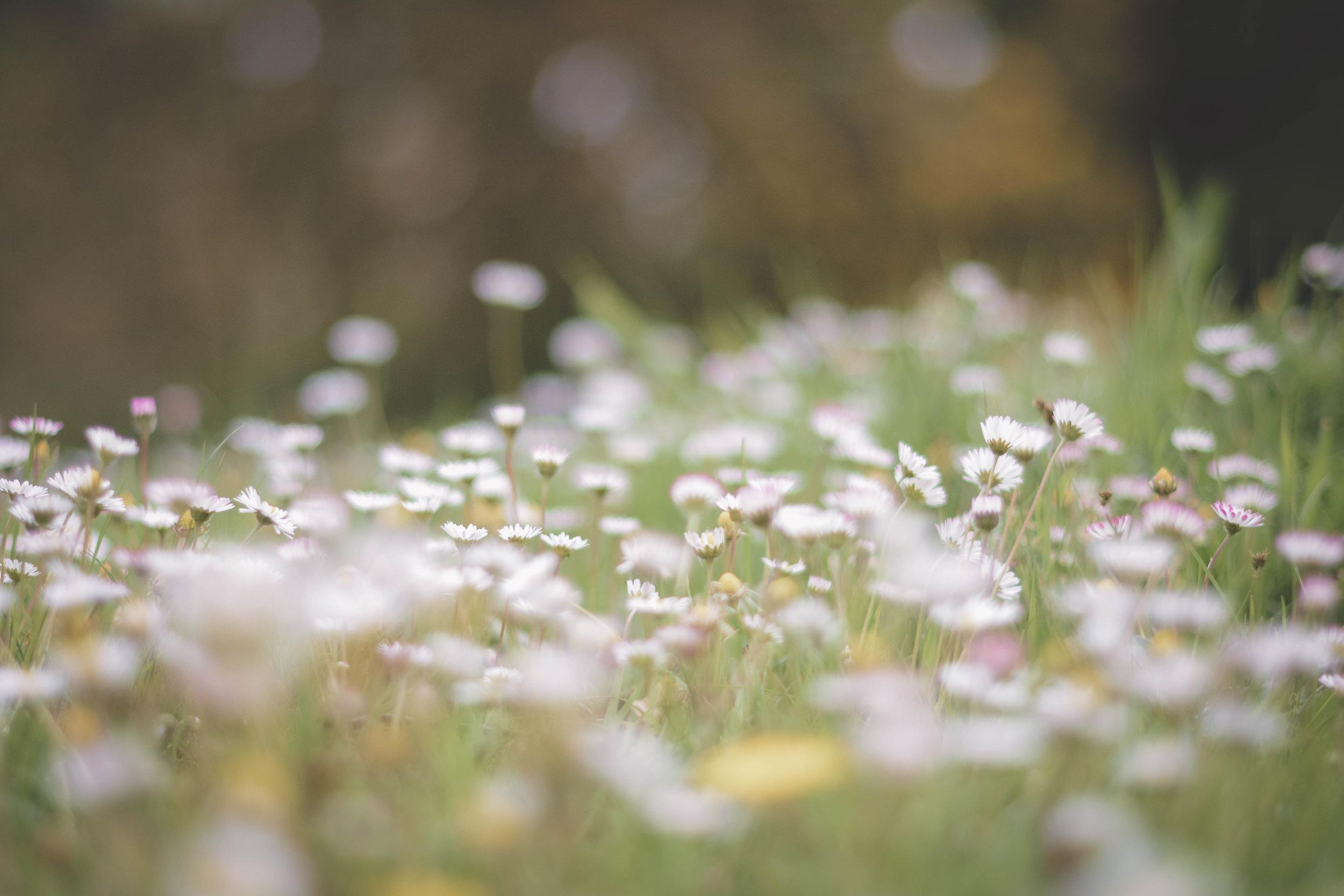 Wild Meadow Walk 10.jpg