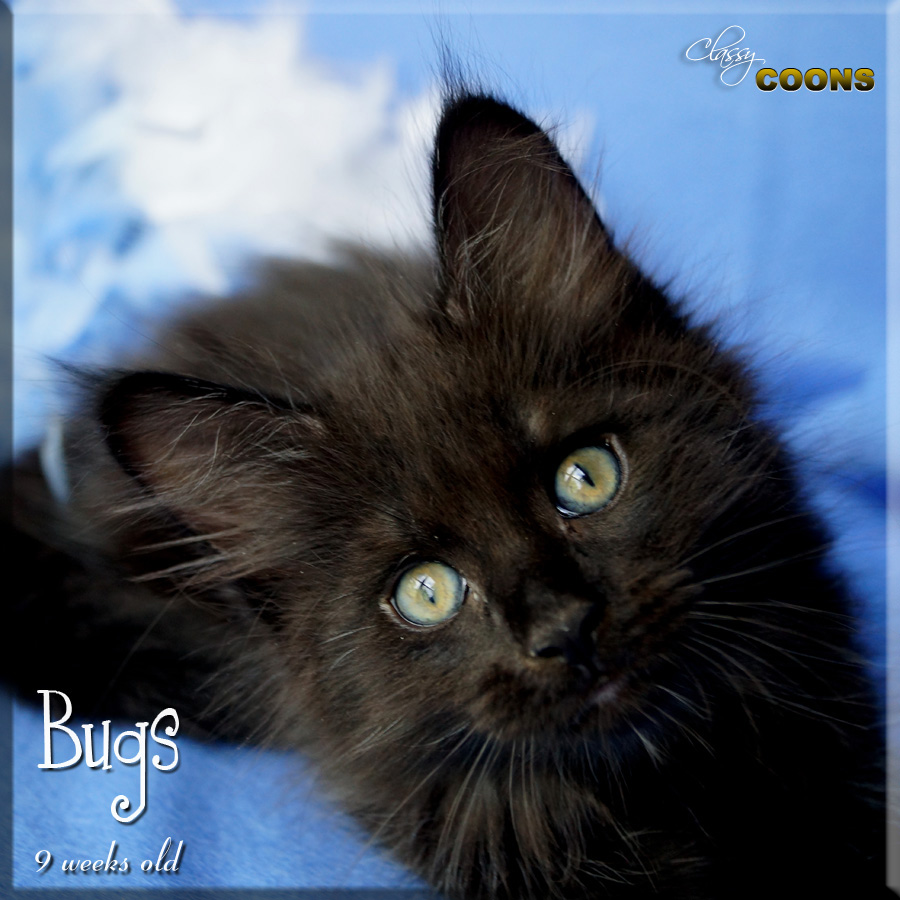 BBBBugs3662 copy.jpg