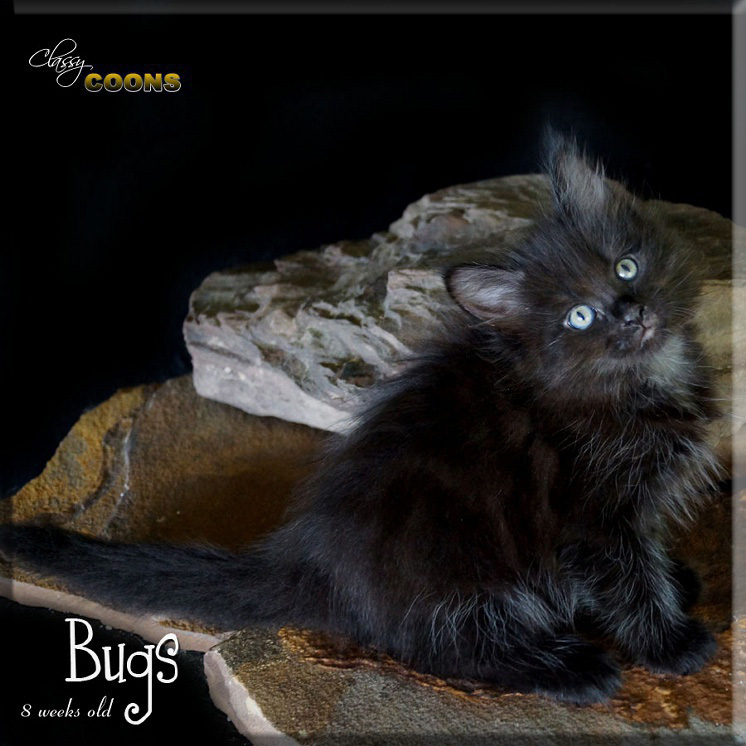 BBBbugs3470 copy.jpg