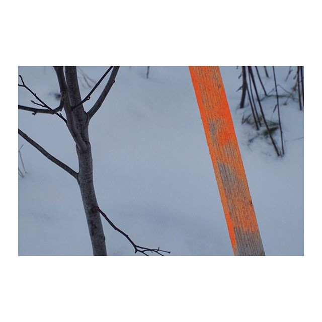 Norway.  During the winter months in Norway the landscape is often coveted by a thick blanket of snow. In the winter time you can spot these fluo marker poles along the road side to indicate where the road goes. Love the simplicity of the white snow, some brown naked branches and a flash of fluorescent orange. Swipe to see one of my collage paintings inspired by this simple colour story @mariahatling #mhcolourstories #mariahatlingcollagepainting