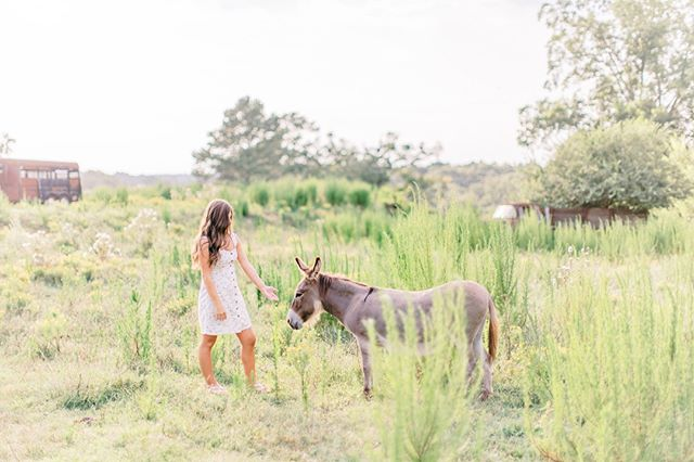Our sweet, little donkey Sadi getting a little love during McKenzie's senior session at the farm...💓⠀⠀⠀⠀⠀⠀⠀⠀⠀ ⠀⠀⠀⠀⠀⠀⠀⠀⠀⠀ Can't wait to share more from this session!