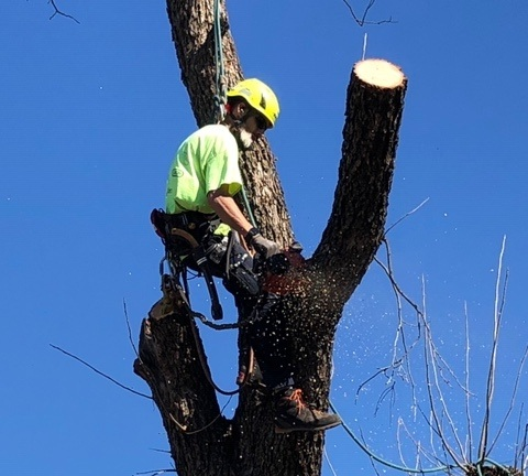 Haught's Tree Service - Tree pruning, removal, diagnostics, stump grinding, consulting, cabling, and maintenance.