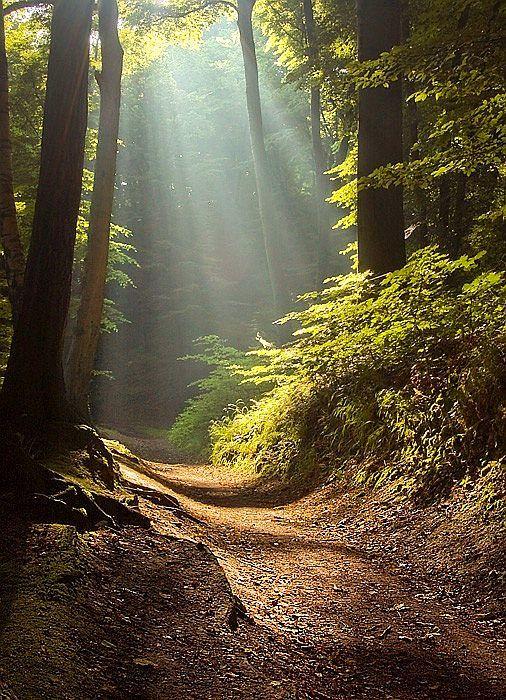 woods path lighting.jpg
