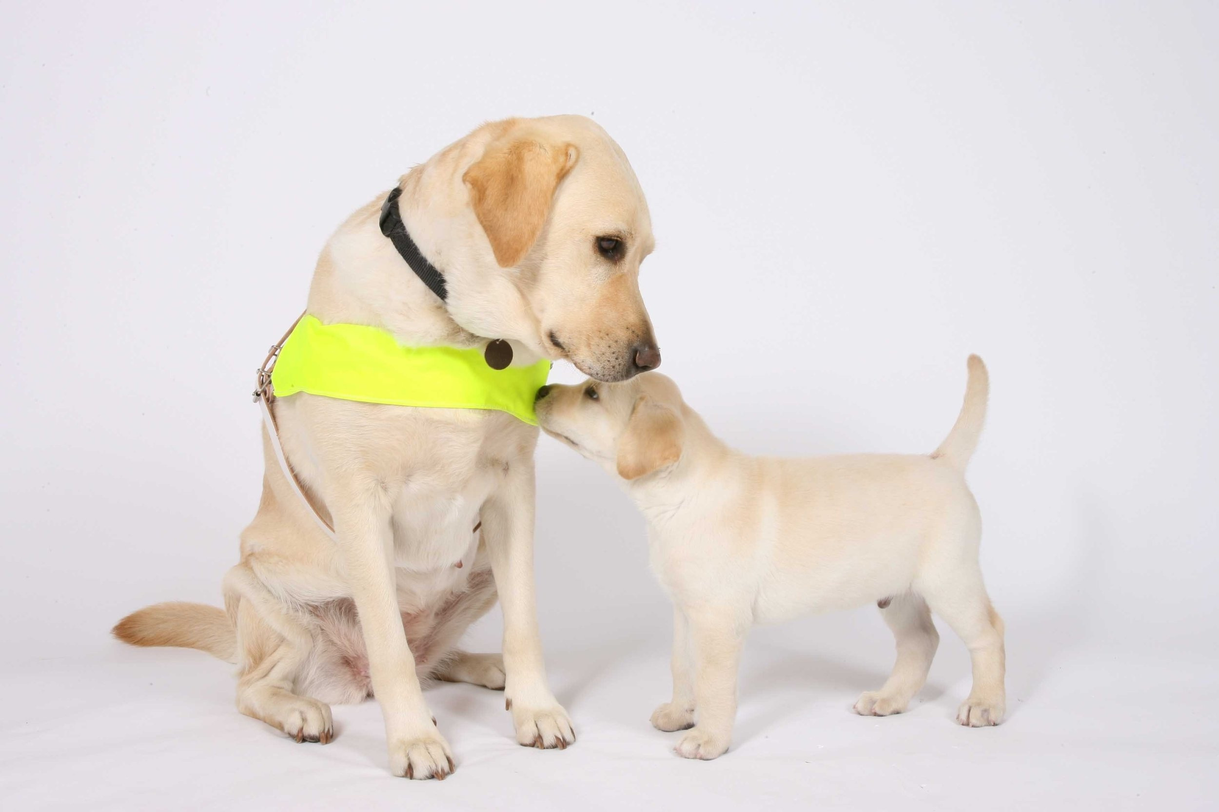GUIDE DOGS CHARITY - This year we are supporting the Guide Dogs charity to raise £2,500 to name a guide dog. With two guide dogs in the village it is a charity close to our heart.