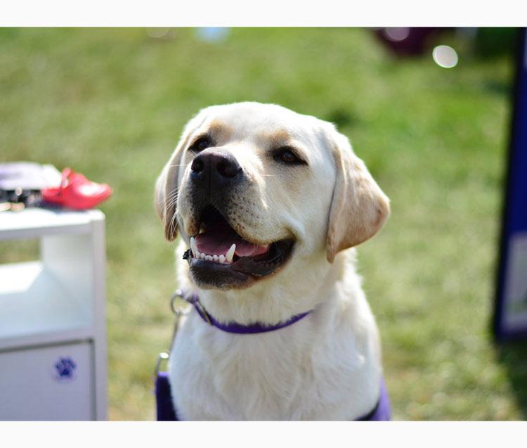 Very happy dog.jpg