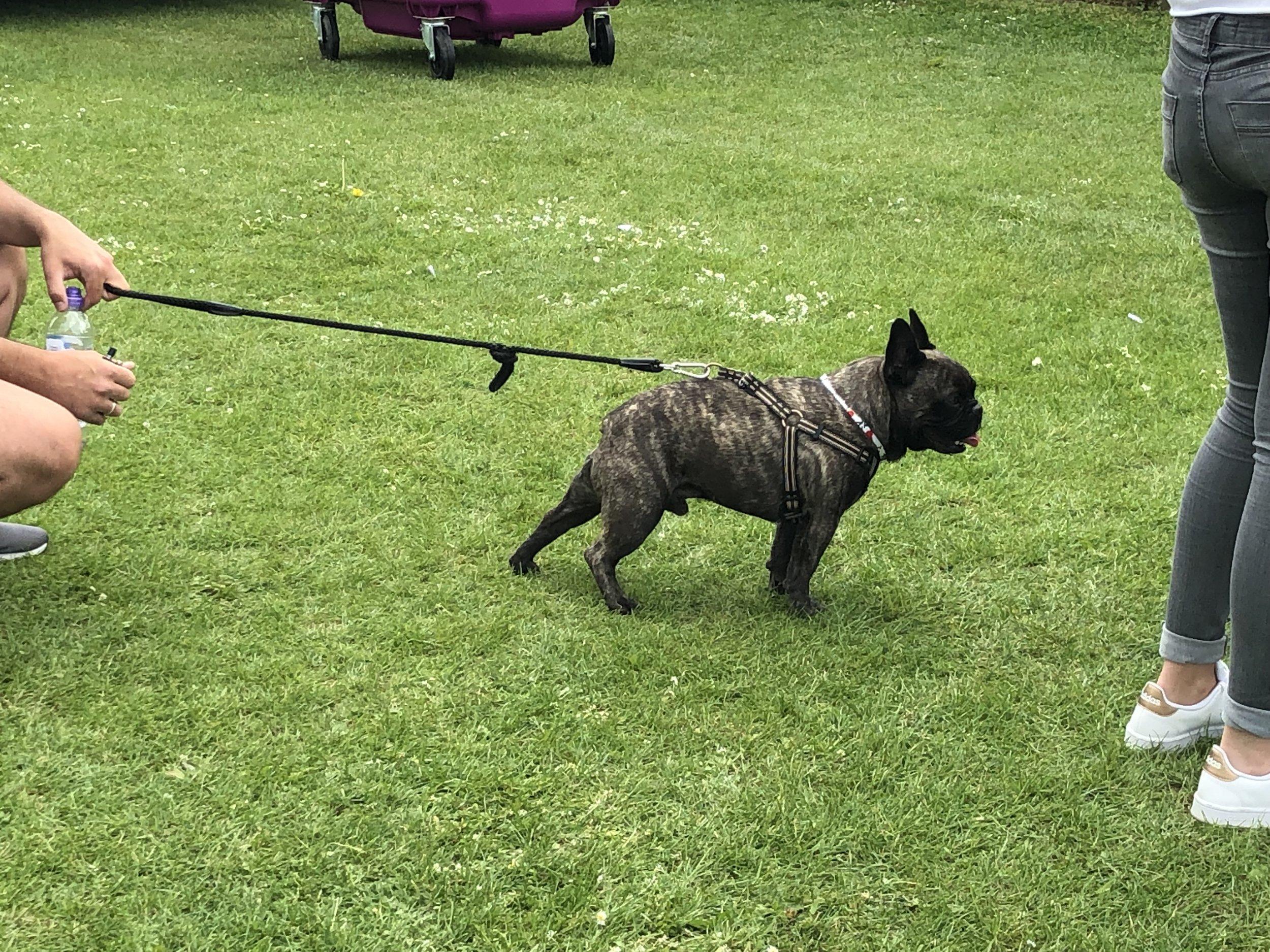 Dog at the show.jpeg