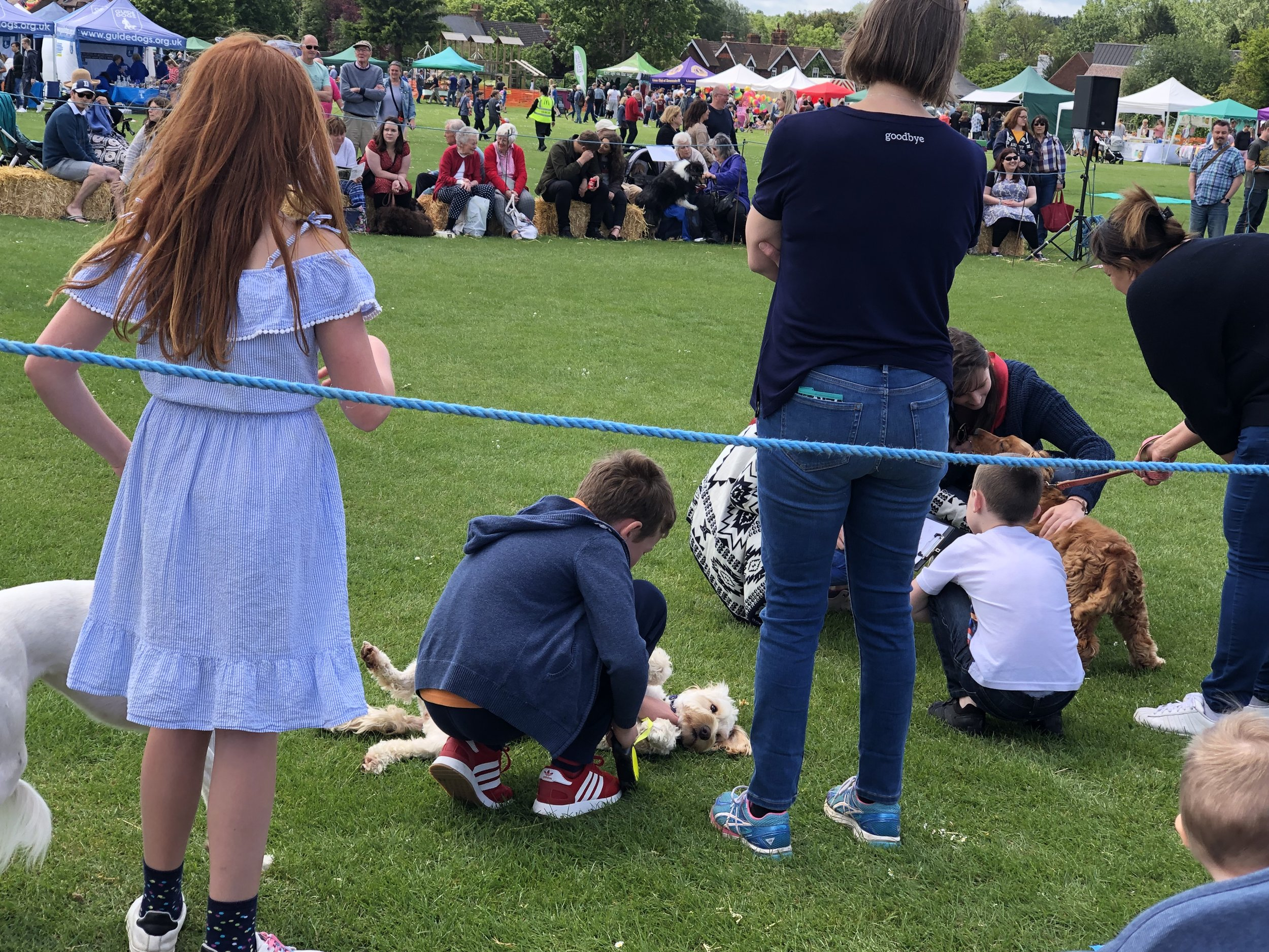 Cute dog being judged at the dog show.jpeg