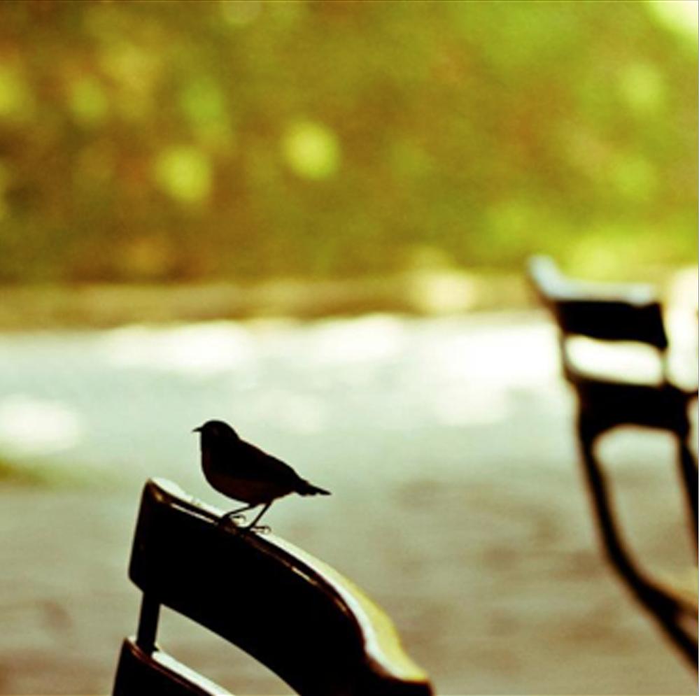 Passarinho Pousada Ventos do Camburi em Sao Sebastiao-Spa Day Natura Ekos Yoga Integral Praia do Camburi Maresias Andre Mayer Sao Sebatiao Almoco com os Passarinhos da Mata Atlantica 4.png
