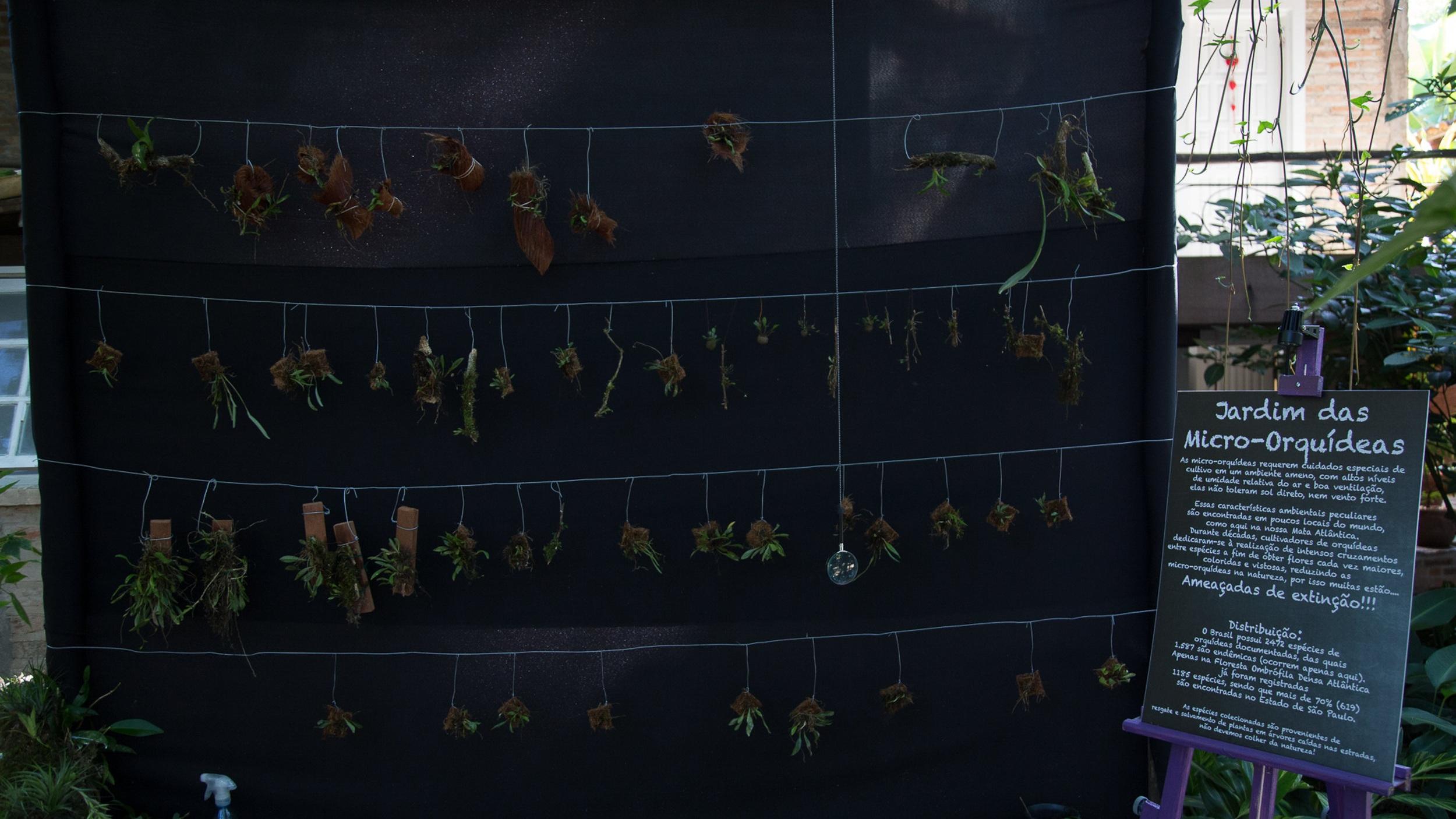 Jardim de Micro-Orquídeas