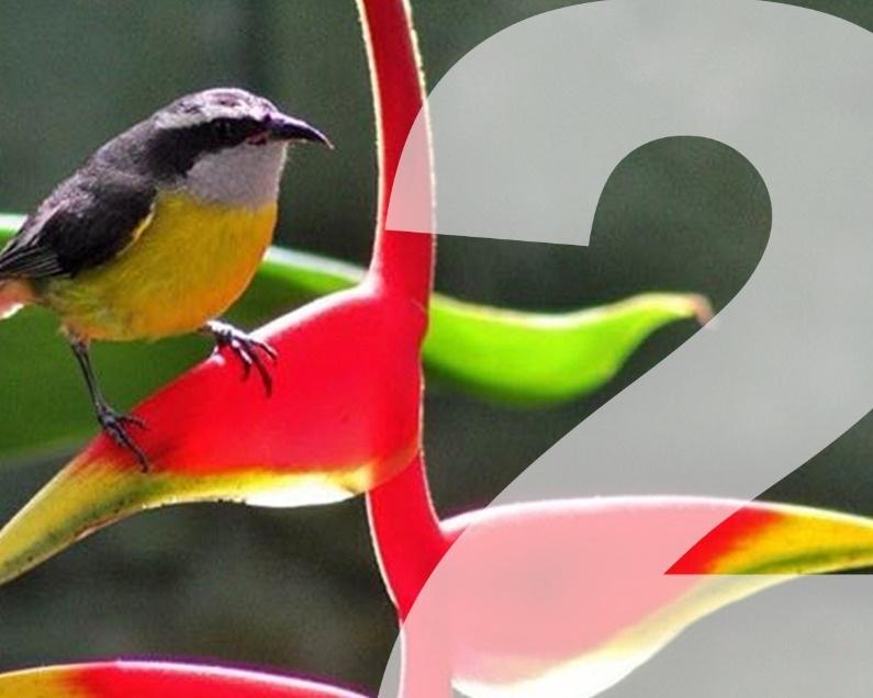 Trekking com Observação de Pássaros - Pacote incluindo hospedagem de duas diárias para o casal+ Trekking com observação de pássaros+ Café da manhã, Almoço e Jantar com as bebidasNível de dificuldade: FácilDuração: 3 a 4 horas (2 km)Valor de R$1.290, para o casal