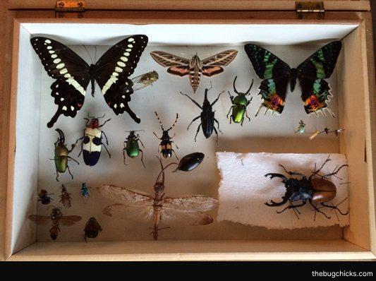 Box-of-Bugs-Final-bug-chicks.jpg