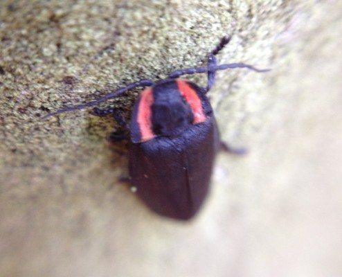 oregon-fireflies-bug-chicks1.jpg