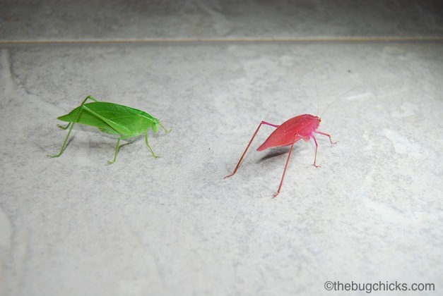 pink-katydid-bug-chicks.jpg