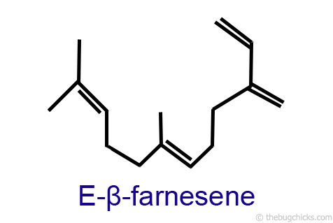 E-β-farnesene is a compound found in essential oils and aphid secretions.