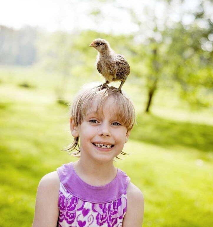back_to_school_chickens.jpg
